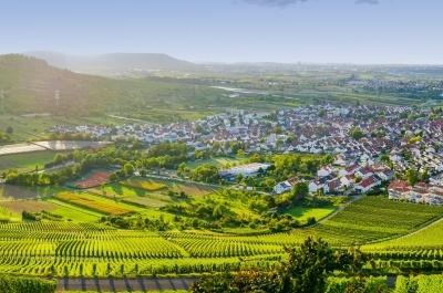 """CDU Baden-Württemberg zum Volksbegehren """"Rettet die Bienen"""": Wir brauchen beides – Bienen und Bauern"""